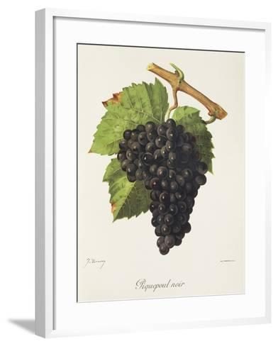 Piquepoul Noir Grape-J. Troncy-Framed Art Print