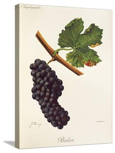 Beclan Grape-J. Troncy-Stretched Canvas Print