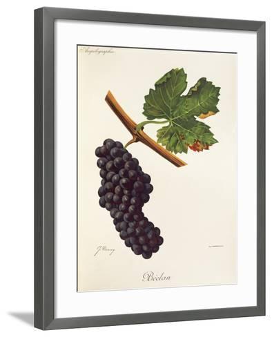 Beclan Grape-J. Troncy-Framed Art Print