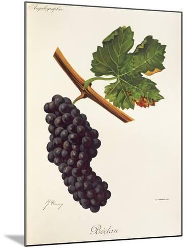 Beclan Grape-J. Troncy-Mounted Giclee Print
