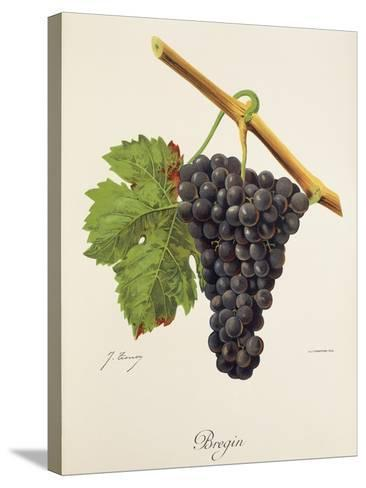 Bregin Grape-J. Troncy-Stretched Canvas Print