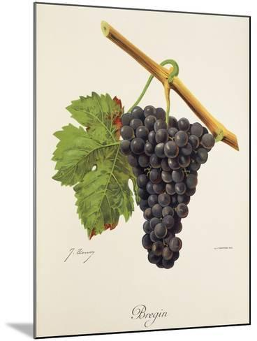 Bregin Grape-J. Troncy-Mounted Giclee Print