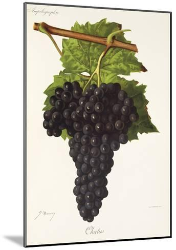 Chatus Grape-J. Troncy-Mounted Giclee Print