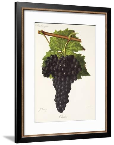 Chatus Grape-J. Troncy-Framed Art Print