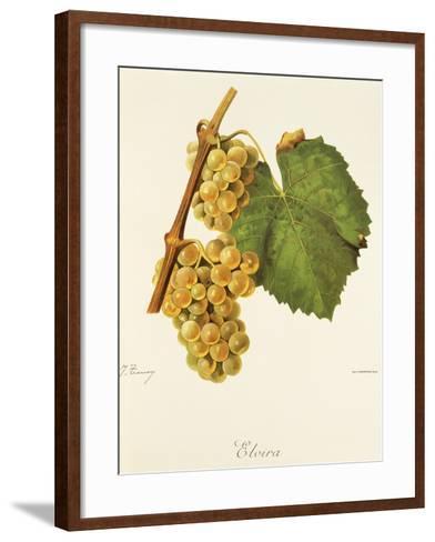 Elvira Grape-J. Troncy-Framed Art Print