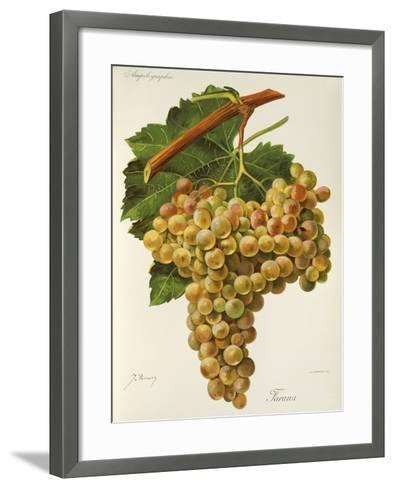 Farana Grape-J. Troncy-Framed Art Print