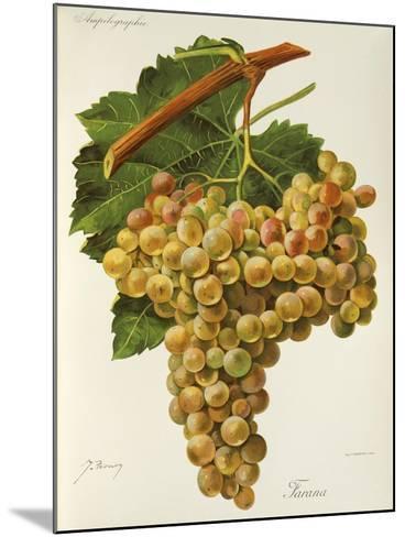 Farana Grape-J. Troncy-Mounted Giclee Print