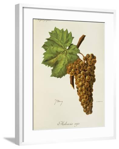 Malvasia Roja Grape-J. Troncy-Framed Art Print