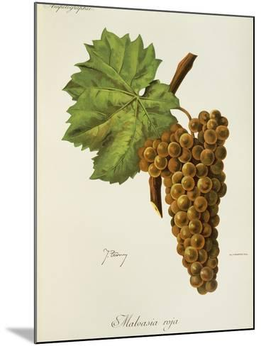 Malvasia Roja Grape-J. Troncy-Mounted Giclee Print