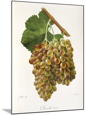 Olivette Rose Grape-J. Troncy-Mounted Giclee Print