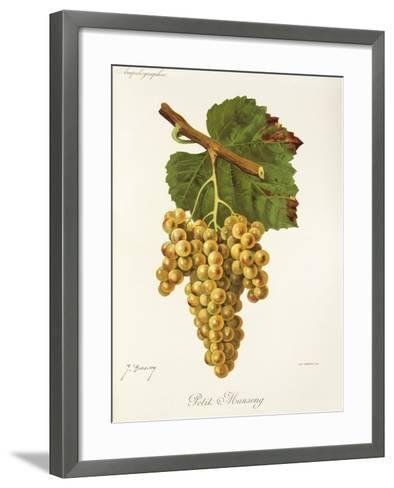 Petit Manseng Grape-J. Troncy-Framed Art Print
