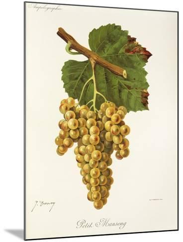 Petit Manseng Grape-J. Troncy-Mounted Giclee Print