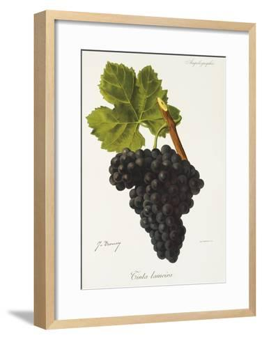 Tinta Lameira Grape-J. Troncy-Framed Art Print