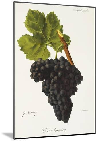 Tinta Lameira Grape-J. Troncy-Mounted Giclee Print