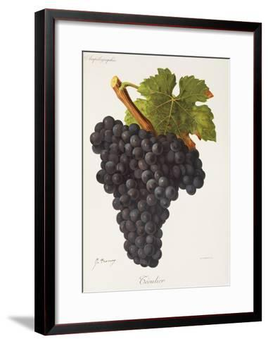 Teoulier Grape-J. Troncy-Framed Art Print