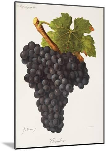 Teoulier Grape-J. Troncy-Mounted Giclee Print