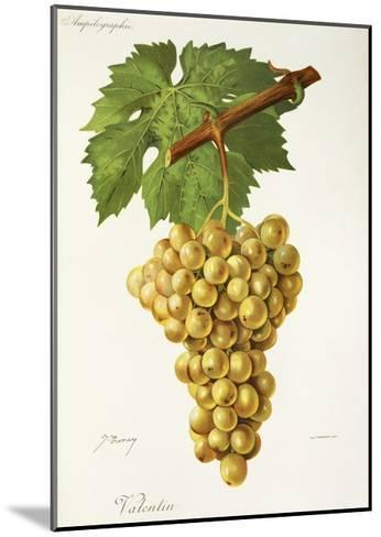Valentin Grape-J. Troncy-Mounted Giclee Print