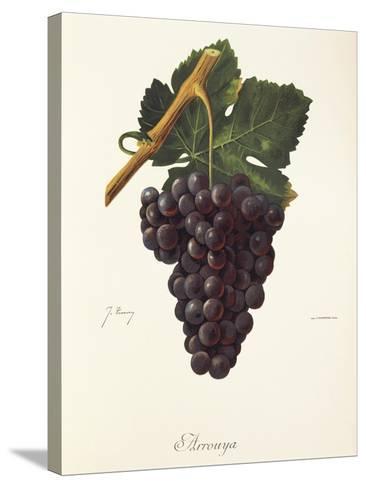 Arrouya Grape-J. Troncy-Stretched Canvas Print