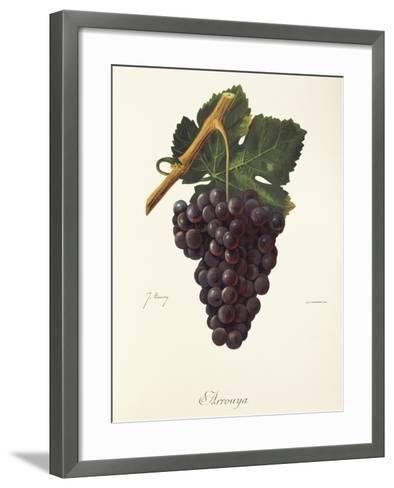 Arrouya Grape-J. Troncy-Framed Art Print