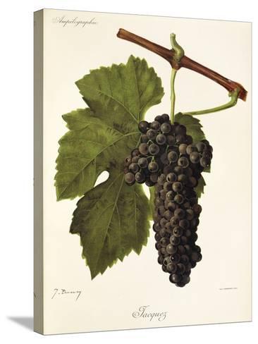 Jacquez Grape-J. Troncy-Stretched Canvas Print