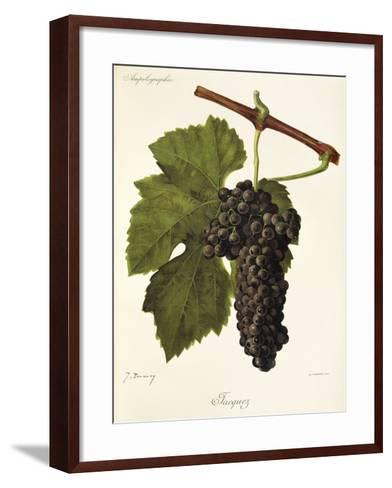 Jacquez Grape-J. Troncy-Framed Art Print