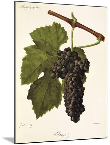 Jacquez Grape-J. Troncy-Mounted Giclee Print
