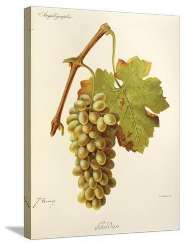 Gordan Grape-J. Troncy-Stretched Canvas Print