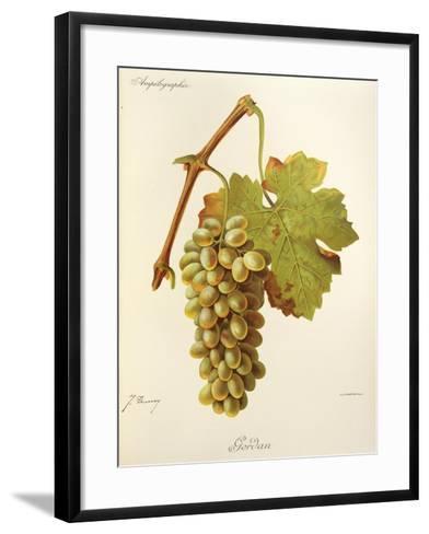 Gordan Grape-J. Troncy-Framed Art Print