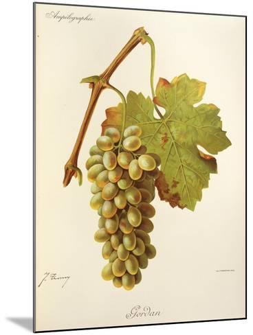 Gordan Grape-J. Troncy-Mounted Giclee Print