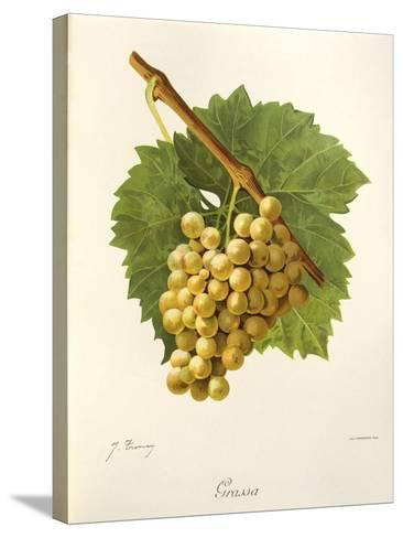 Grassa Grape-J. Troncy-Stretched Canvas Print