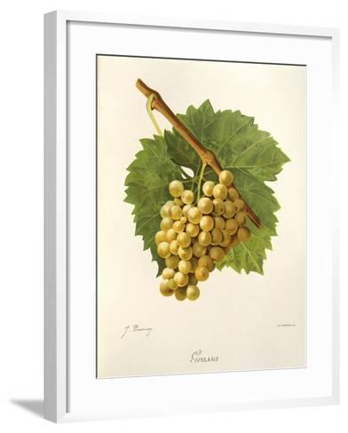 Grassa Grape-J. Troncy-Framed Art Print
