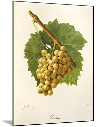 Grassa Grape-J. Troncy-Mounted Giclee Print