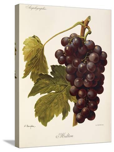 Milton Grape-J. Troncy-Stretched Canvas Print