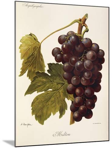Milton Grape-J. Troncy-Mounted Giclee Print