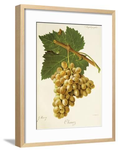 Ohanez Grape-J. Troncy-Framed Art Print