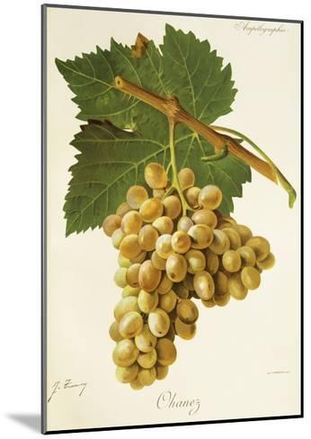 Ohanez Grape-J. Troncy-Mounted Giclee Print