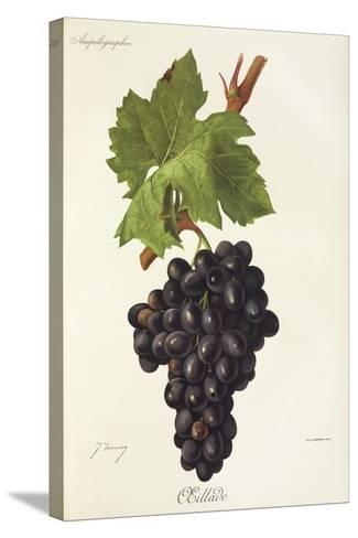 Oeillade Grape-J. Troncy-Stretched Canvas Print
