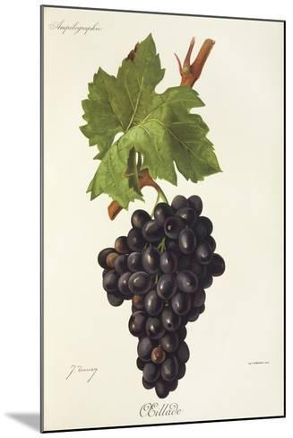 Oeillade Grape-J. Troncy-Mounted Giclee Print