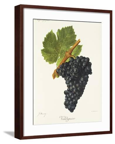 Valdiguier Grape-J. Troncy-Framed Art Print