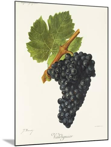 Valdiguier Grape-J. Troncy-Mounted Giclee Print