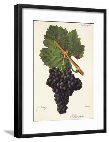 Albourion Grape-J. Troncy-Framed Art Print