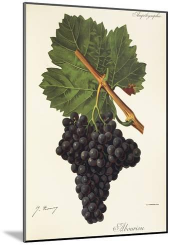 Albourion Grape-J. Troncy-Mounted Giclee Print