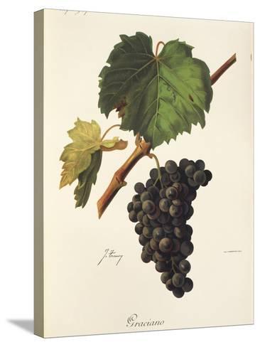 Graciano Grape-J. Troncy-Stretched Canvas Print