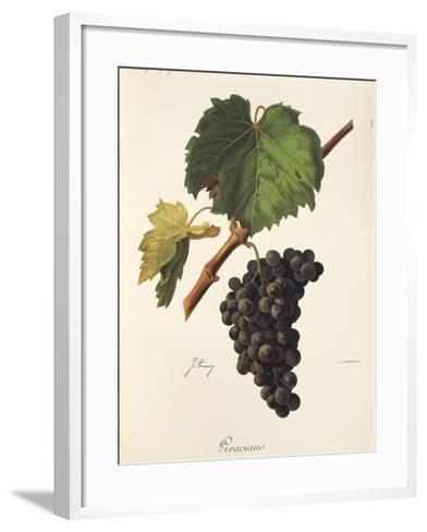 Graciano Grape-J. Troncy-Framed Art Print