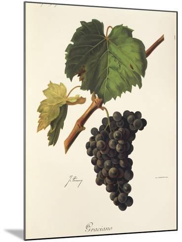 Graciano Grape-J. Troncy-Mounted Giclee Print