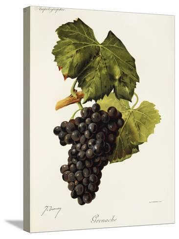 Grenache Grape-J. Troncy-Stretched Canvas Print