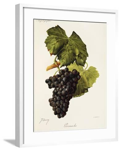 Grenache Grape-J. Troncy-Framed Art Print