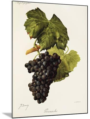 Grenache Grape-J. Troncy-Mounted Giclee Print