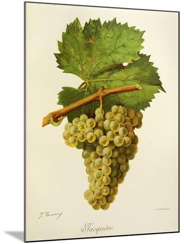 Jacquere Grape-J. Troncy-Mounted Giclee Print