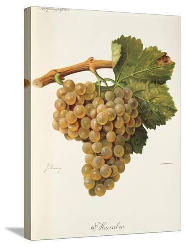 Maccabeo Grape-J. Troncy-Stretched Canvas Print